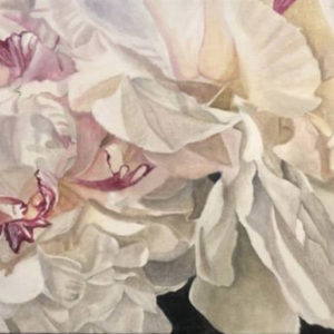 "Two Festiva Maxima Peonies, 24""x12"" Acrylic on canvas"