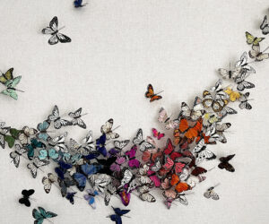 """'Untitled (Multicolor Butterflies)' 2020, Hand painted feathers on linen panel with acrylic enclosure, 30""""x60"""""""