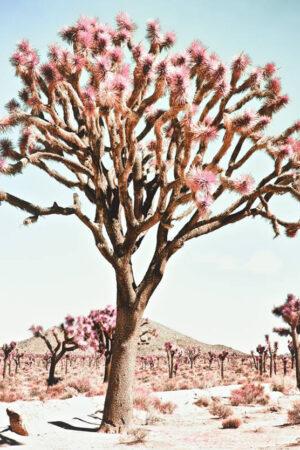 """Pastel Desert - California"" Limited edition print, 50""x50"""