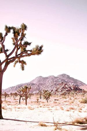 """California Desert - Rose"" Limited edition print, 36""x24"""